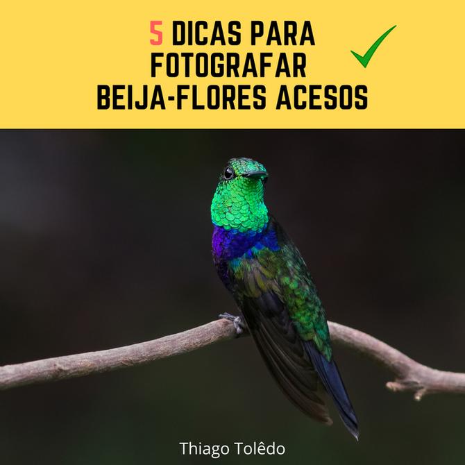 5 Dicas para Fotografar Beija-Flores ACESOS
