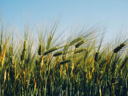 Funrural: Bancada ruralista reforça perdão de dívidas de produtores.