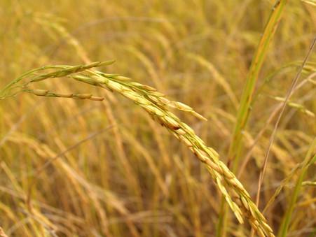 FUNRURAL: Bloqueio de bens dos produtores