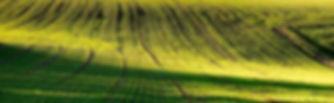 field-2842.jpg