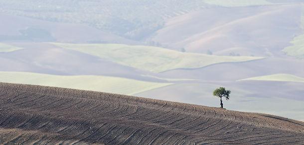 trees-4447.jpg