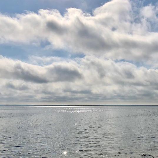 Grey day beauty.jpg