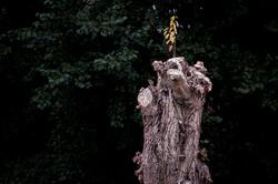 trees-2278-Edit