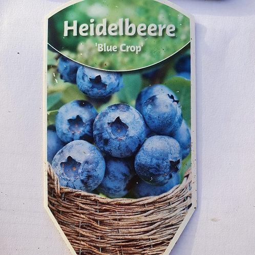 Heidelbeere 'Blue Crop'
