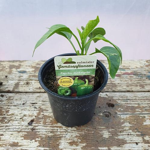 Paprika dunkelgrün