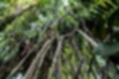 180315-DSC09849-Trek Pula-Patyay-Philipp