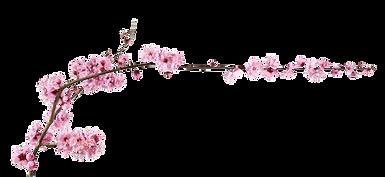 KONO YO - Japanse gezichtsmassage - Kersenbloesem