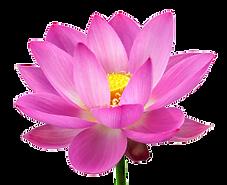 KONO YO - Japanse gezichtsmassage - Lotus
