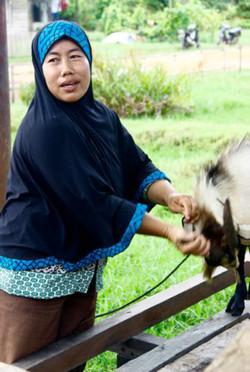 Goats for widows
