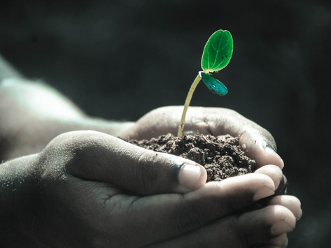 CLICK's Soil Spotlight: Future Global Learning in Agriculture