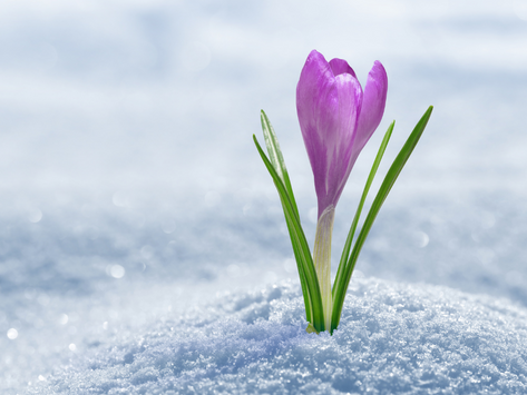 Waukesha Winter Blossoms in Spring: Grow Global with CLICK Virtual Exchange!