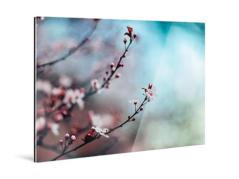 acrylic-photo-print-view.jpg