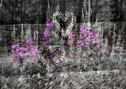 Hjerter på rams