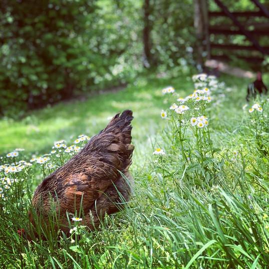 Pasture Life