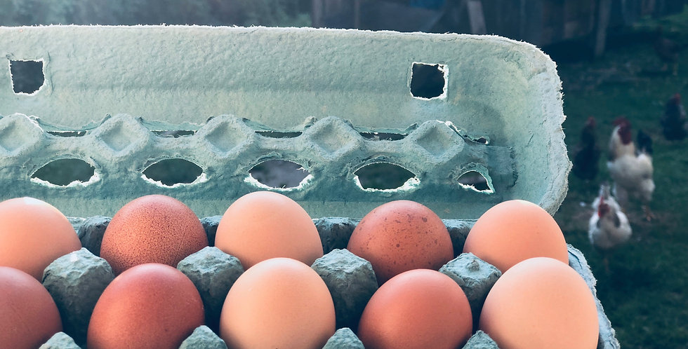 1 Dozen farm fresh organic brown eggs