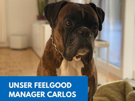 Ein Hund im Büro?
