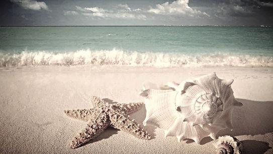 Пляжный отдых на берегу морей и океанов. Шри Ланка, Маврикий, Бали, Сейшелы, Занзибар