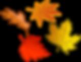 foliage-150715_960_720.png