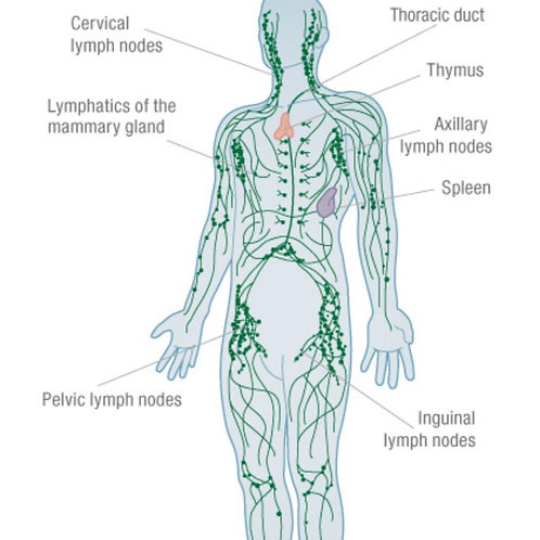 Intensive Lymphatic Drainage Massage Course
