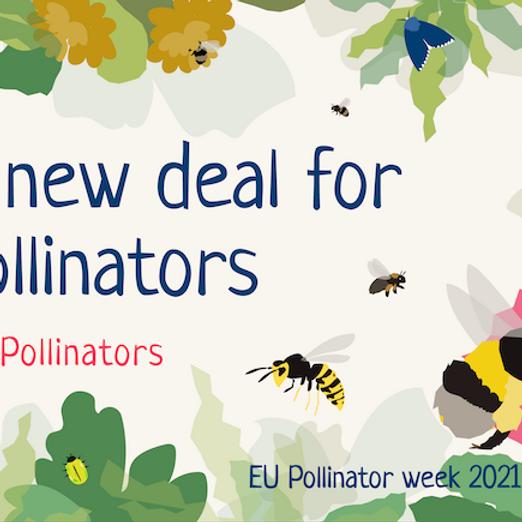 EU Pollinator Week