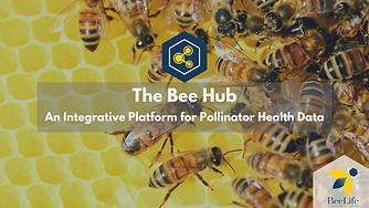 Bee Hub PoC Article.png