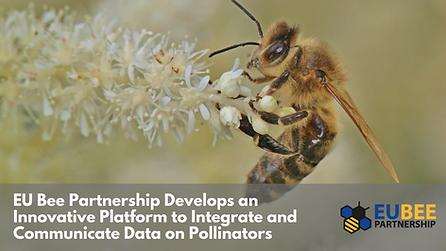EU Bee Partnership Develops an Innovative Platform to Integrate and Communicate Data on Pollinators