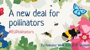 Llega la Semana de los Polinizadores de la UE del 27 al 30 de septiembre de 2021