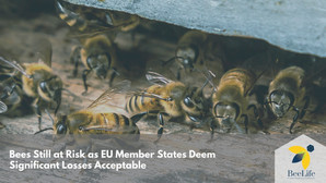 Bees Still at Risk as EU Member States Deem Significant Losses Acceptable