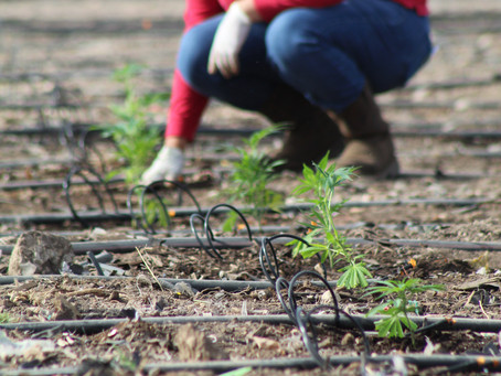 Planting- Round One