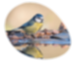 header_egg_bluetit.png