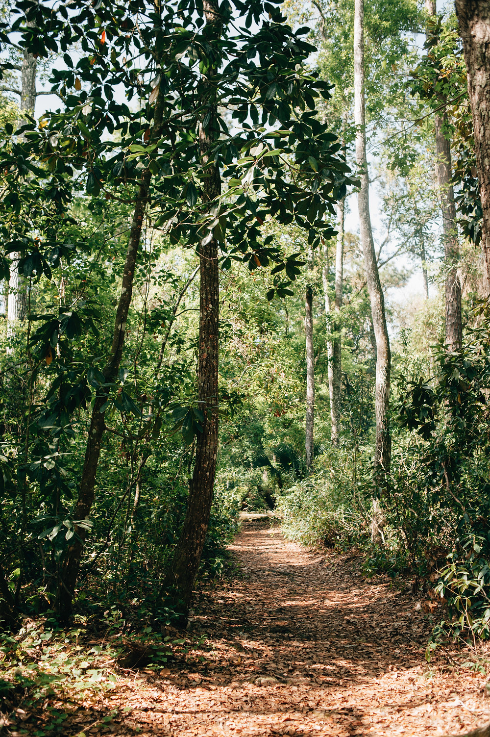 Florida Day Trips with Kids