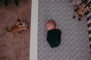 jacksonville fl in home newborn photographer
