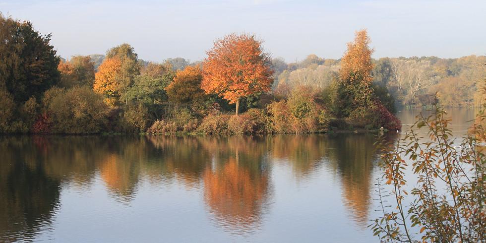 Autumn Colour Walk