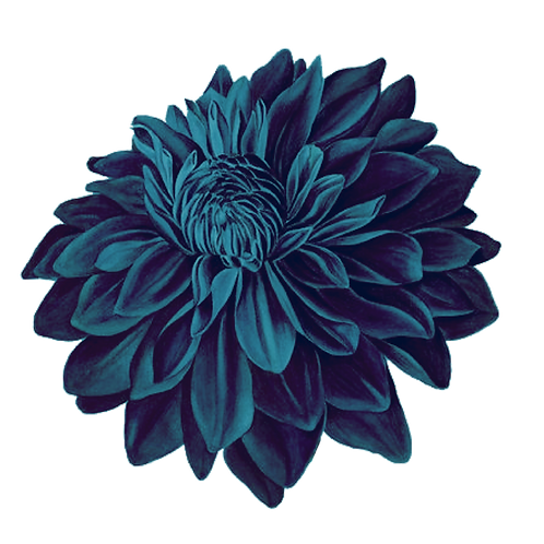 ONLY flower.png