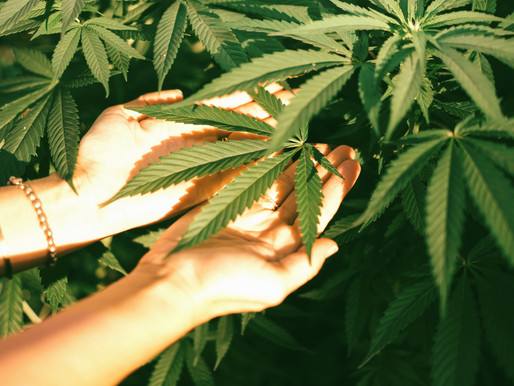 Boosting Email Marketing Success For The Cannabis Industry
