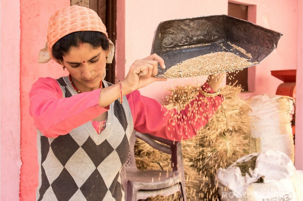 A women filtering corn