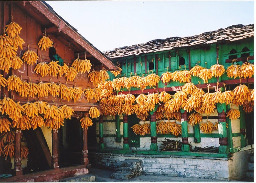 Houses with corn cobs in Sainji Village