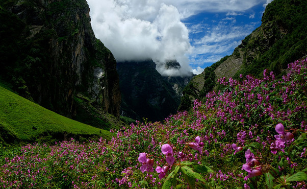 valley of flowers, Naina Devi National Park