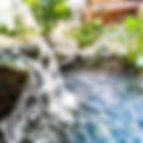 Aquatopia_Plants_Pond_Water_Feature.JPEG