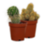 Web Store Placeholder Plants-3.png