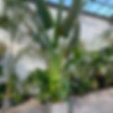 Photo 2020-02-05, 12 31 32 PM.jpg