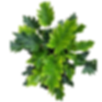 Web Store Placeholder Plants-2.png