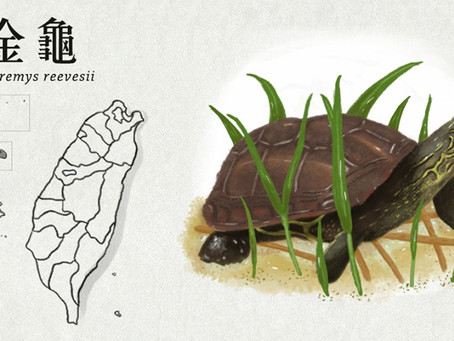 【極危動物】為愛而臭的金龜