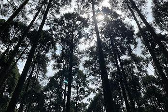 林業管理.jpg
