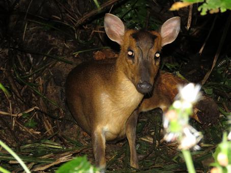 致命陷阱:野生動物悲歌