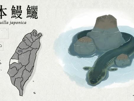 【極危動物】想要長大的日本鰻鱺
