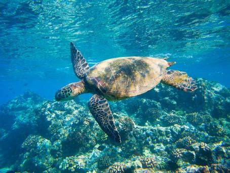 【真人圖書館】海洋達人郭兆偉 分享海龜一生曲折的返家歸途