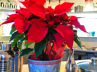 Decoration With Poinsettia