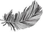 Feather_Horizontal black.jpg