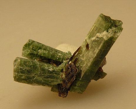Tremolite (variety Chromium) and Phlogopite